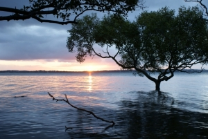 River Tree, Wellington Point Brisbane by Jennifer Renee